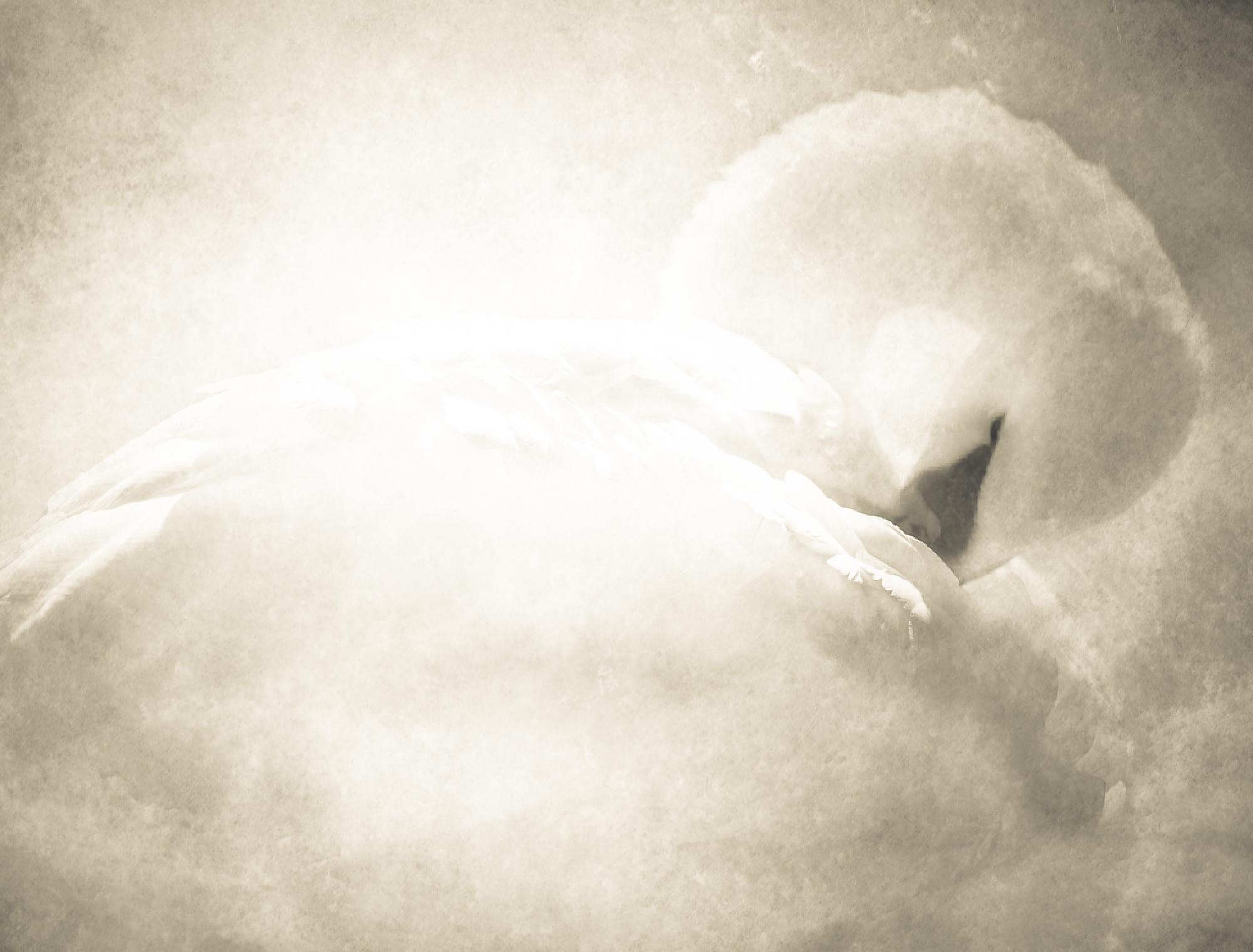 "Featured image of post BOOK PROJECT ""SWAN"""